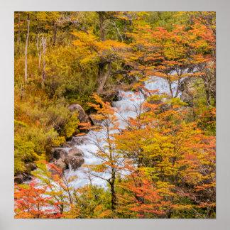 Póster Escena coloreada del paisaje del bosque, Patagonia