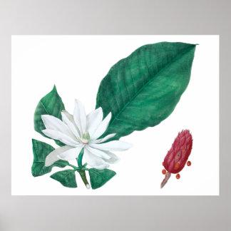 Póster Estampado de flores grande blanco de la magnolia