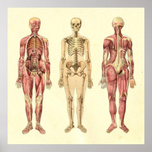 Anatomía: Anatomia a Temprana Edad