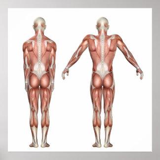 Póster figura médica que muestra la elevación y el depre