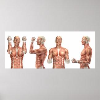 Póster figura médica que muestra la flexión y la