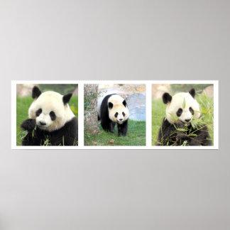 Póster Fijar 30x90 Panda gigante
