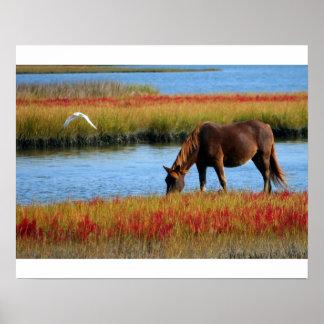 Póster Fijar a caballo en los pantanos