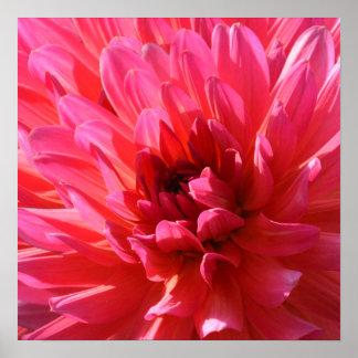 Póster Flor de la dalia del florista rosado psicodélico
