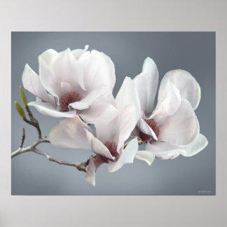 Póster Flor de la magnolia de la primavera, rosa,