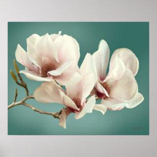 Póster Flor de la magnolia de la primavera, rosa, trullo