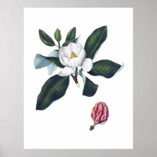 Póster Flor grande blanca Cusion de la magnolia