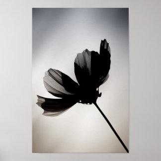 Póster Flor negra