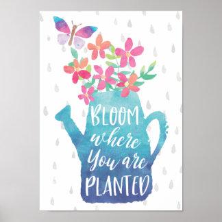 Póster Floración donde le plantan