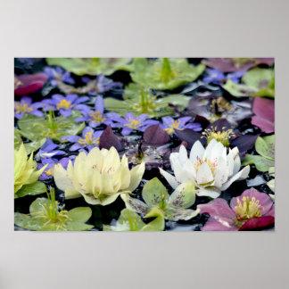 Póster Flores coloridas de los hellebores