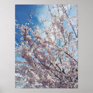 Póster Flores de cerezo