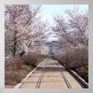 Póster Flores de cerezo y pistas Philadelphia