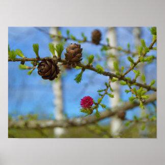 Póster Flores del alerce