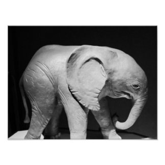 Póster Foto blanco y negro del elefante
