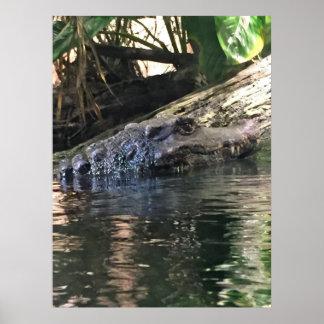 Póster Foto del cocodrilo