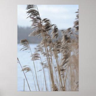 Póster Foto escénica pacífica de la hierba del lago