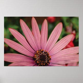 Póster Foto hermosa de la flor del primer