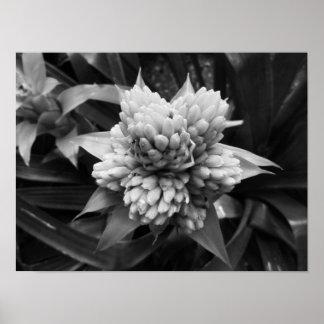 Póster Fotografía floral blanco y negro
