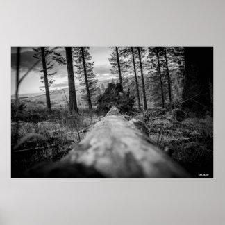 Póster Fotografía original: Más allá del árbol caido