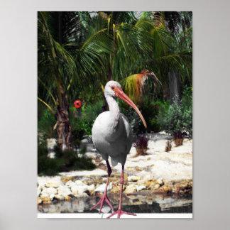 Póster Fotografía tropical hermosa del pájaro