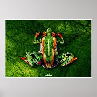 Póster Frog by Johannes Stötter