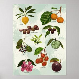 Póster Frutas tropicales filipinas exóticas pintadas a