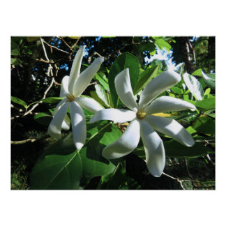 Póster Gardenia de Tahitian