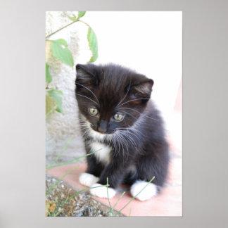 Póster Gatito blanco y negro