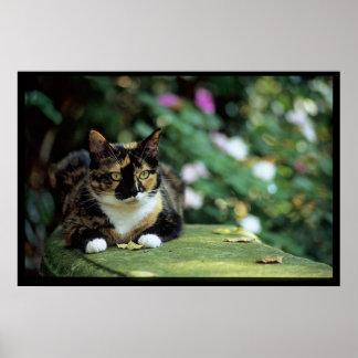 Póster Gato de Tortie en banco del jardín