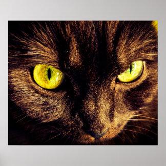 Póster Gato Piercing de Munchkin de la mirada