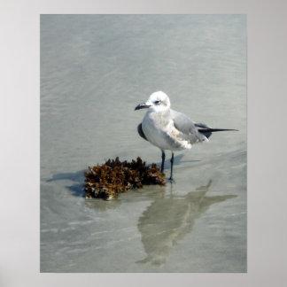 Póster Gaviota en la playa con alga marina