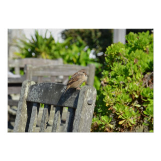 Póster Gorrión en una silla de jardín