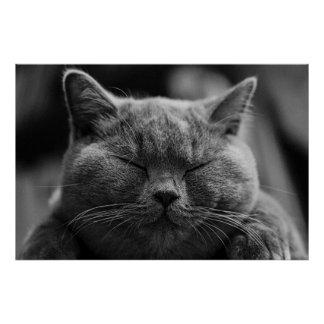 Poster gris feliz del gato póster