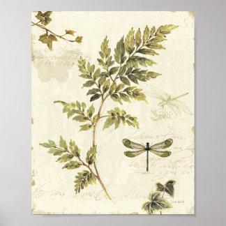 Póster Helechos decorativos y una libélula