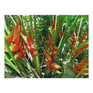 Póster Heliconia