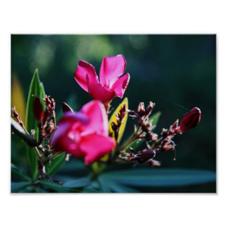 Poster hermoso del flor póster