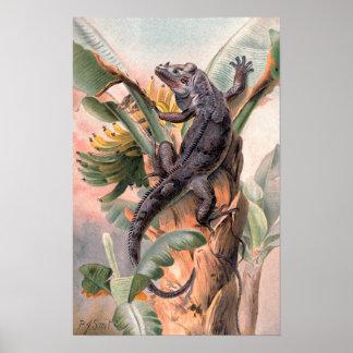 Póster Iguana negra tropical, animal salvaje del reptil