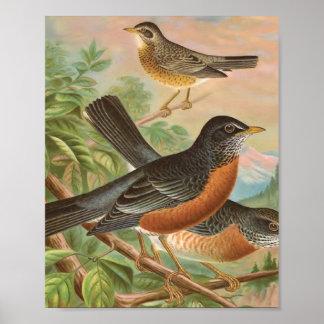 Póster Ilustracion americano del pájaro del vintage del