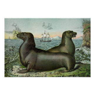 """Póster Ilustracion de los leones marinos del vintage 19"""""""