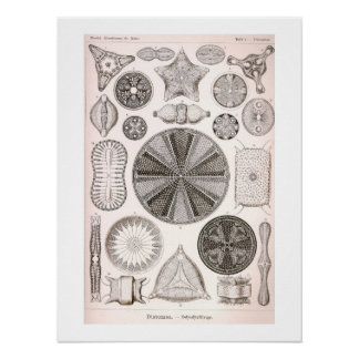 Póster Ilustracion del vintage de las diatomeas