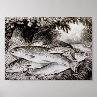 Póster Imagen del vintage de la pesca de la trucha