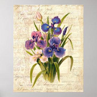 Póster Iris rosados del vintage elegante y púrpuras