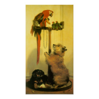 Póster Islay, Tilco, un Macaw y pájaros del amor por