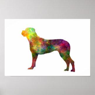 Póster Italian Corso Dog 01 in watercolor 2