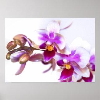 Póster La oficina de la flora de la orquídea personaliza