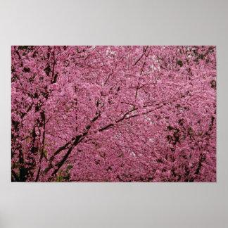 Póster La primavera brillante roja florece en árboles de