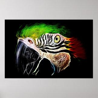 Póster Macaw azul y amarillo