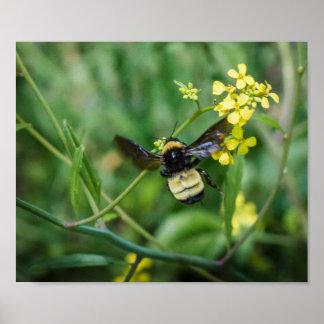 Póster Manosee la abeja en vuelo