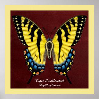 Póster Mariposa de Swallowtail del tigre
