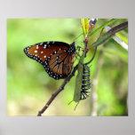 Póster Mariposa y monarca Caterpillar de la reina